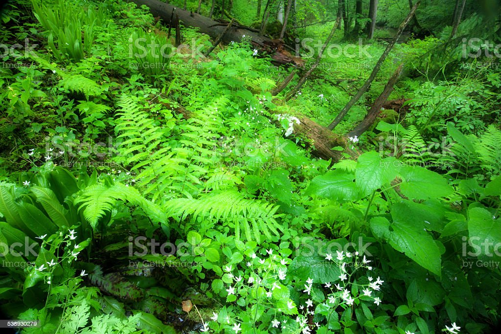 drenched wood, tranquil fresh green scene stock photo