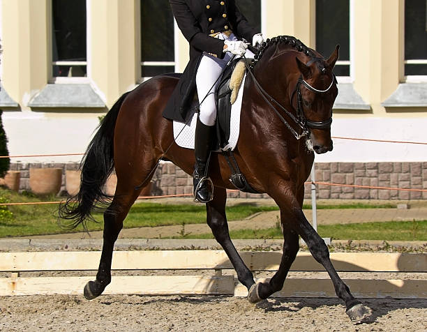 cavalier et cheval de dressage - dressage photos et images de collection