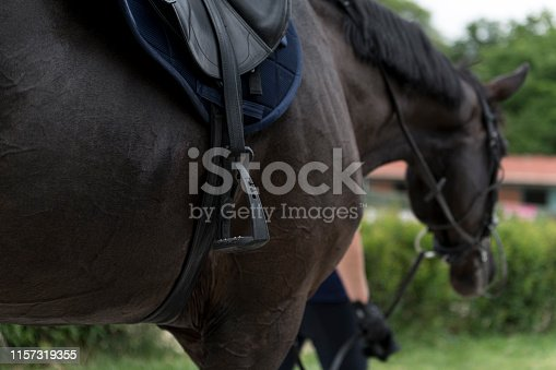 Horse, Activity, Animal, Horse Family, Jumping