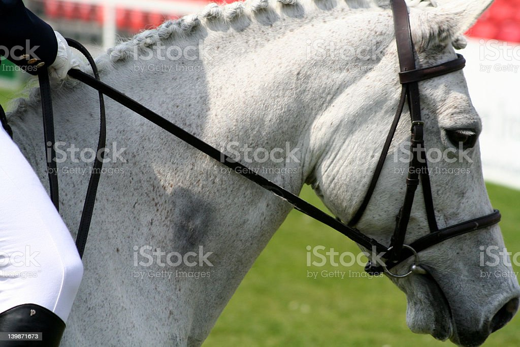 Dressage horse and rider royalty-free stock photo