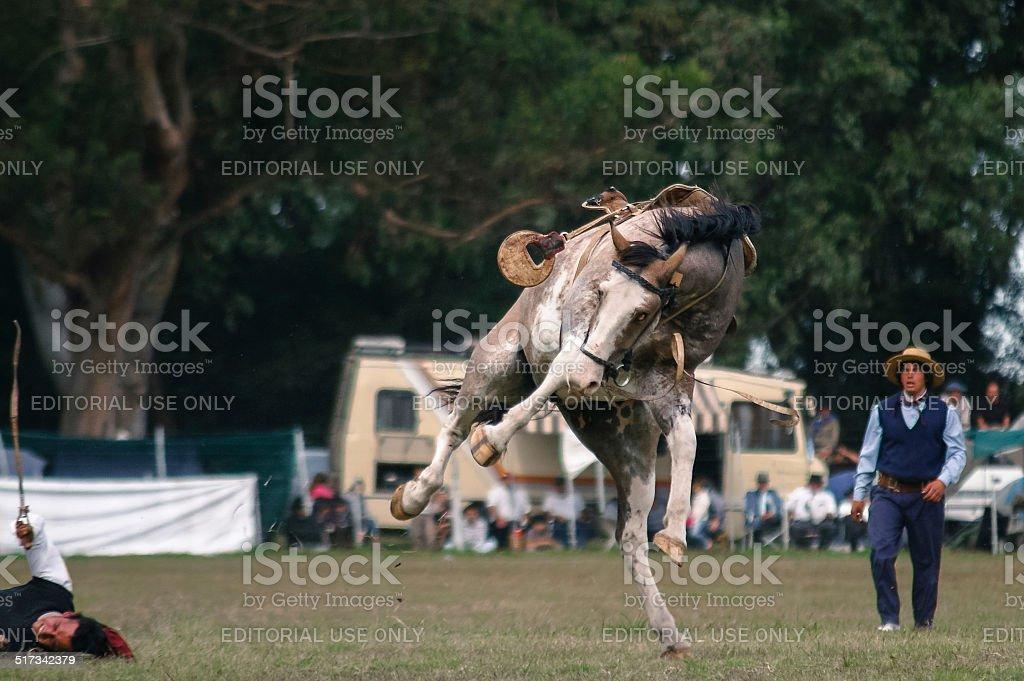 Dressage Horse, Fallen stock photo