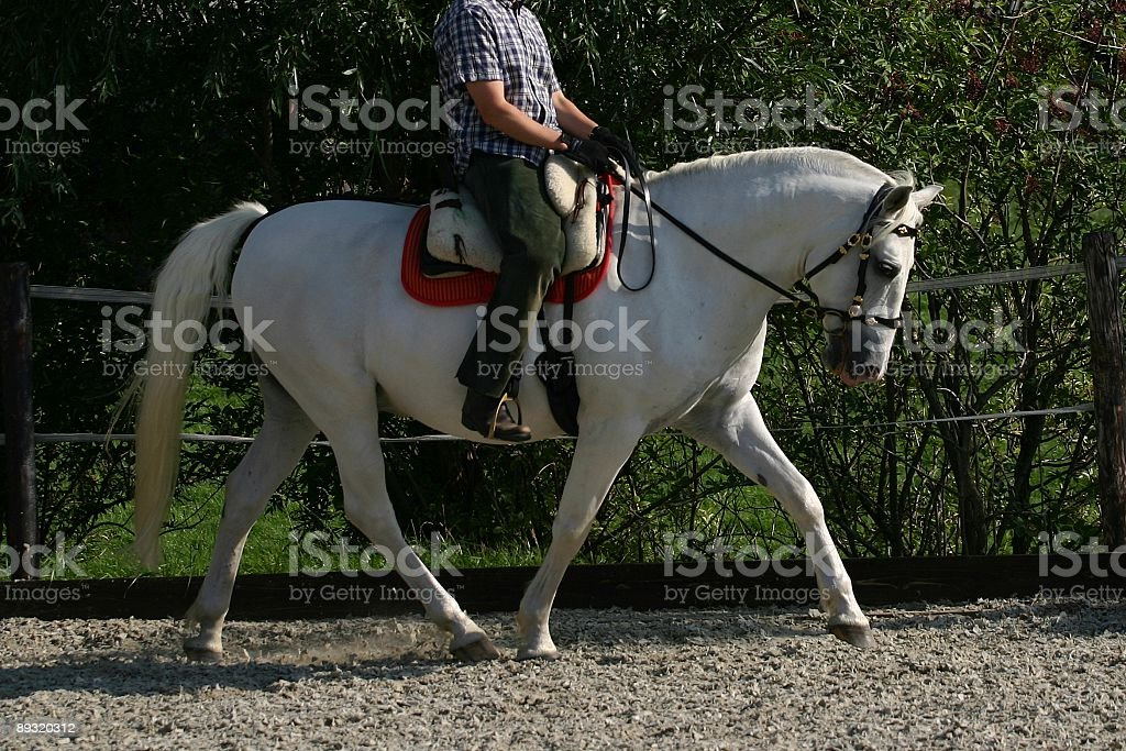 Dressage horse stock photo