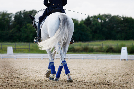 Dressage horse with jockey in jumping course