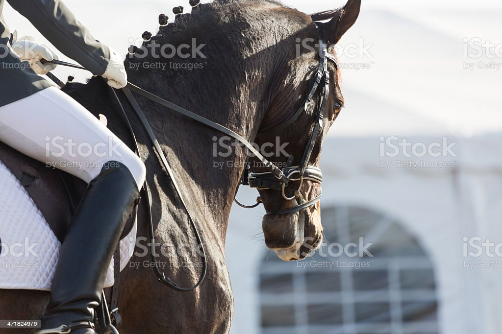 Dressage Horses stock photo