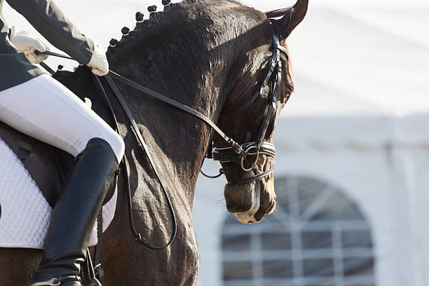 Dressage Horses Closeups of a competition of dressage horses in Spain arabian horse stock pictures, royalty-free photos & images