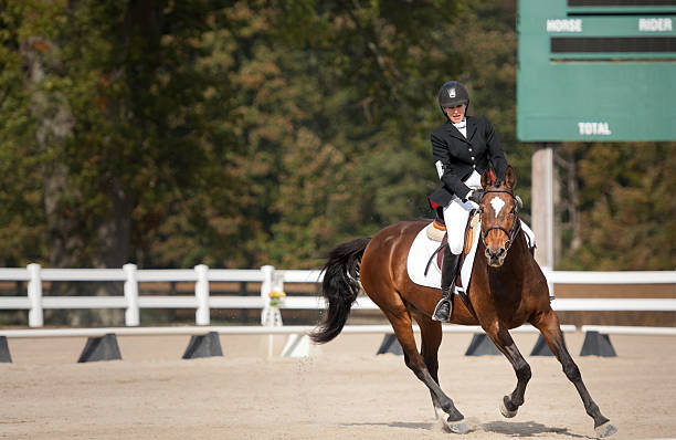 dressage test - kellyjhall stock pictures, royalty-free photos & images