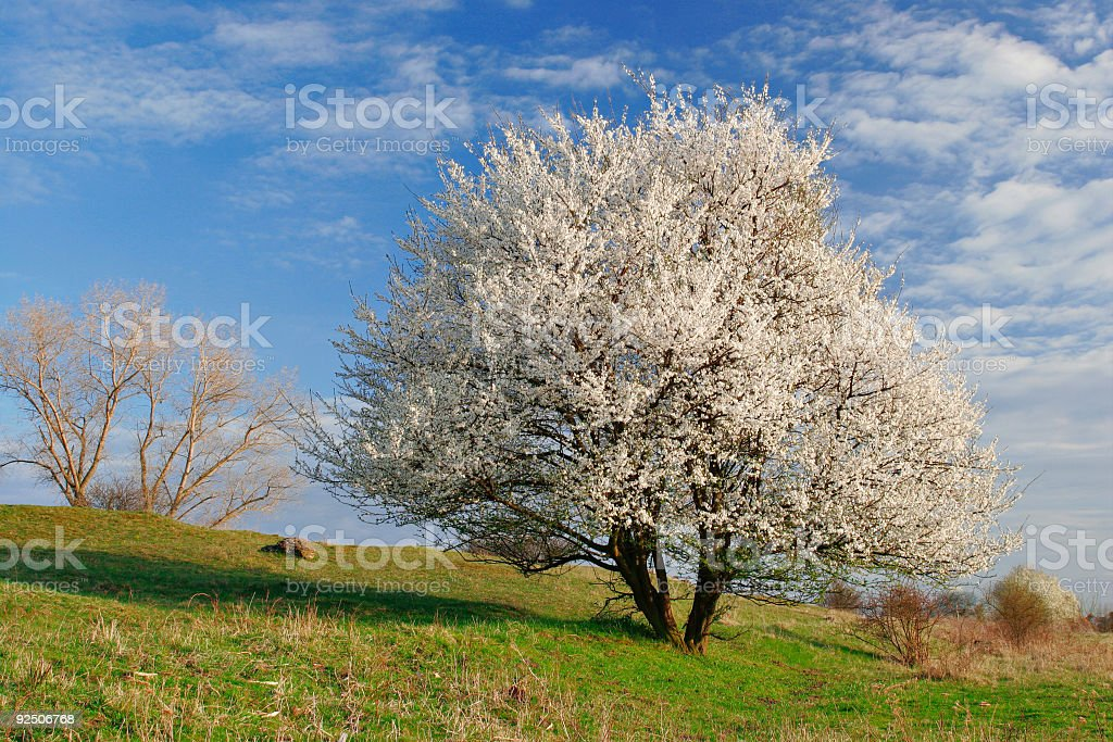 Dressed in White royalty-free stock photo