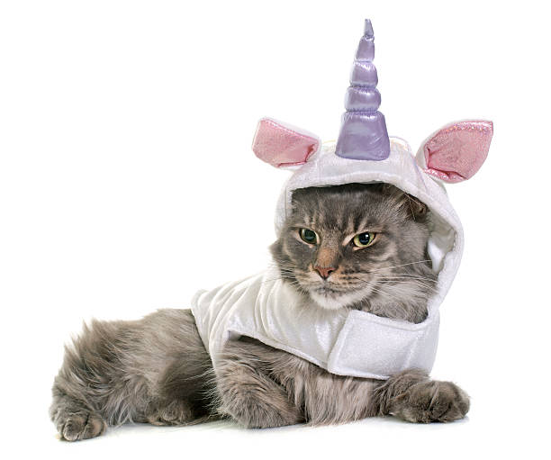 dressed maine coon cat - unicorns stock photos and pictures