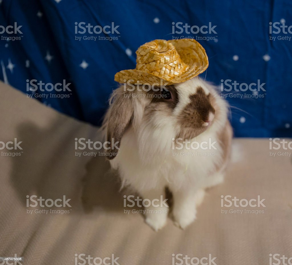 Dressed up Bunny wearing a hat stock photo