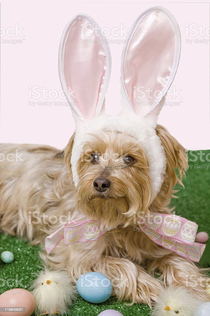 Dressed Up for Easter royalty-free stock photo
