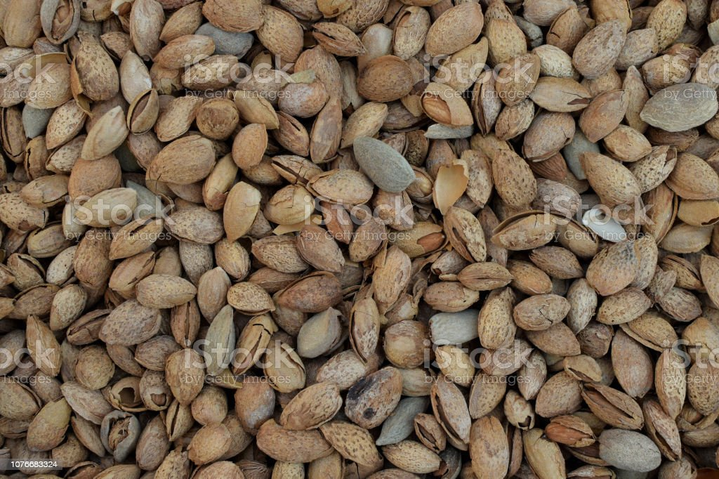 Dried almonds in shell background stock photo