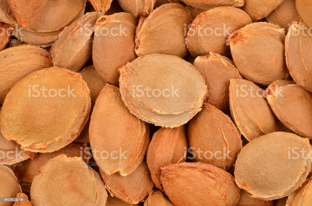 Dried apricot kernel stock photo