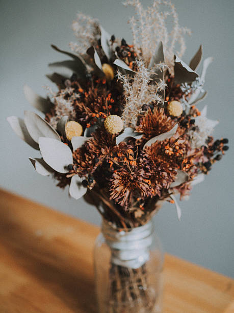 dried autumn flowers - dode plant stockfoto's en -beelden