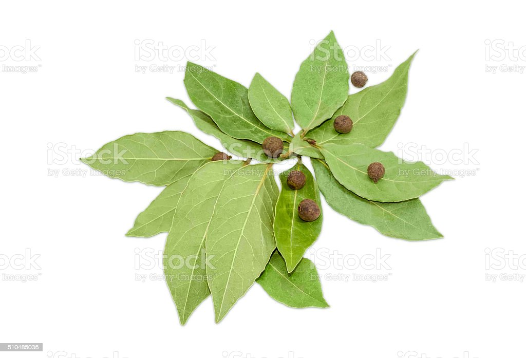 Dried bay leaf and allspice on a light background stock photo