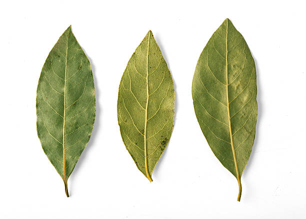Dried bay leaves isolated stock photo