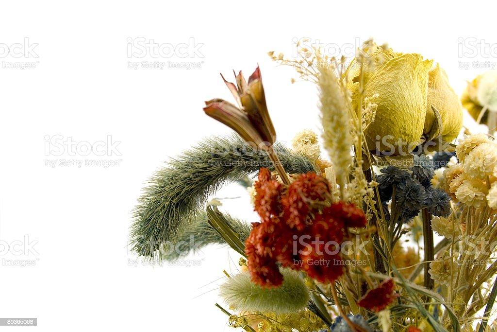 dried bouquet royaltyfri bildbanksbilder