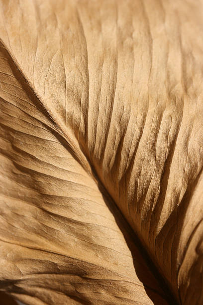 Dried brown leaf stock photo