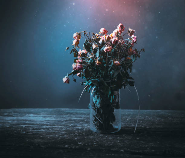 Best Dead Flowers Stock Photos, Pictures & Royalty-Free