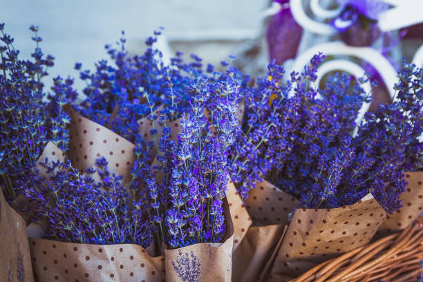 Dried bunches of lavender hanging on string. stock photo