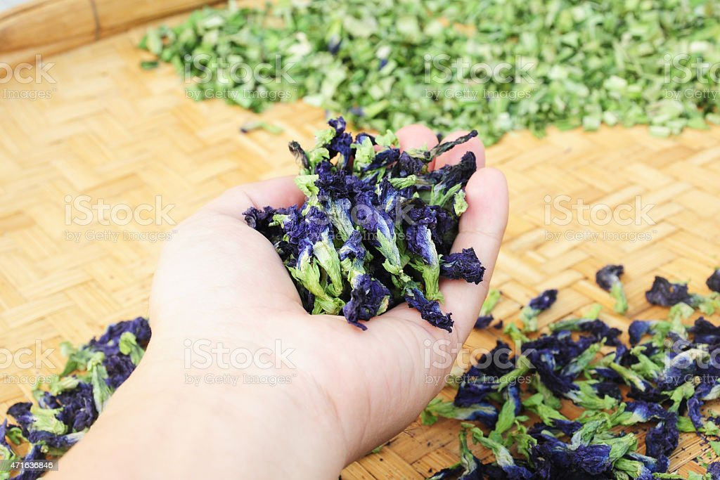 Dried butterfly pea herb flowers in hand stock photo