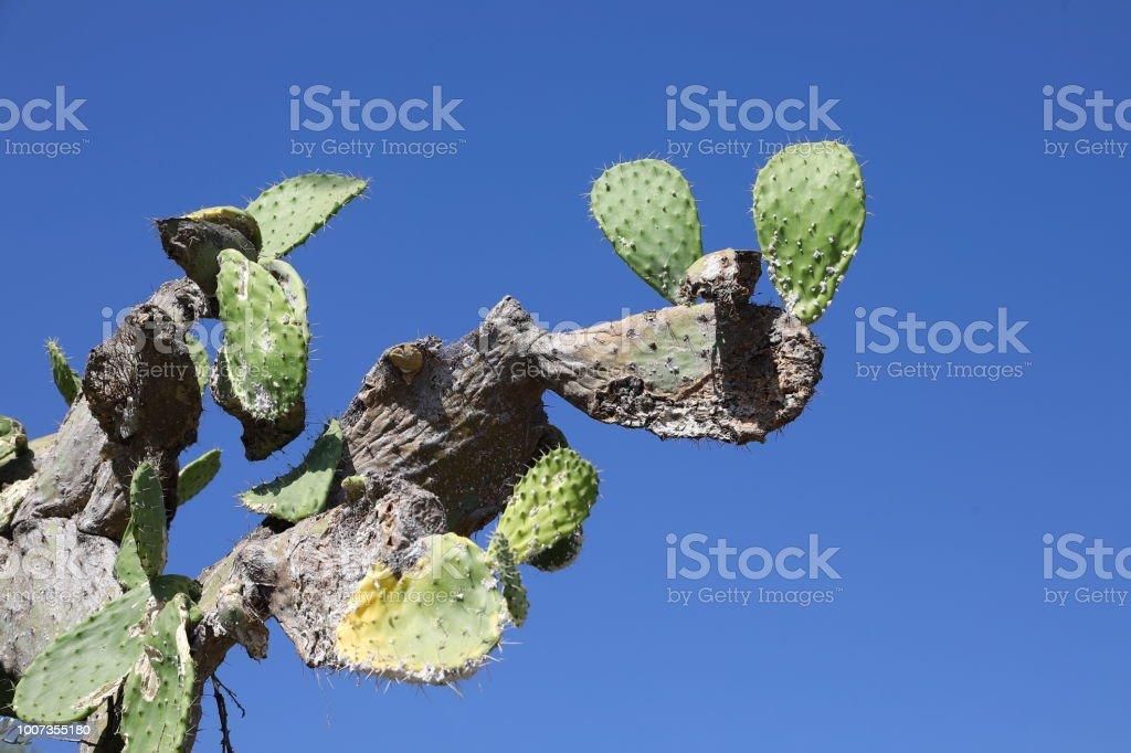 Dried cactus stock photo