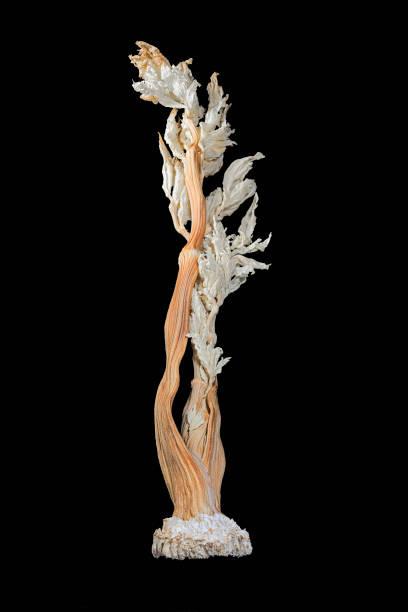 Getrockneter Selleriestiel mit Blättern – Foto