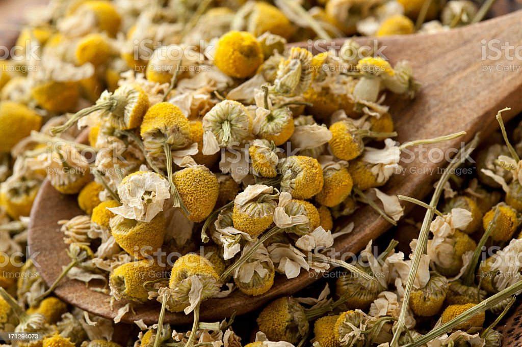 Dried chamomile stock photo