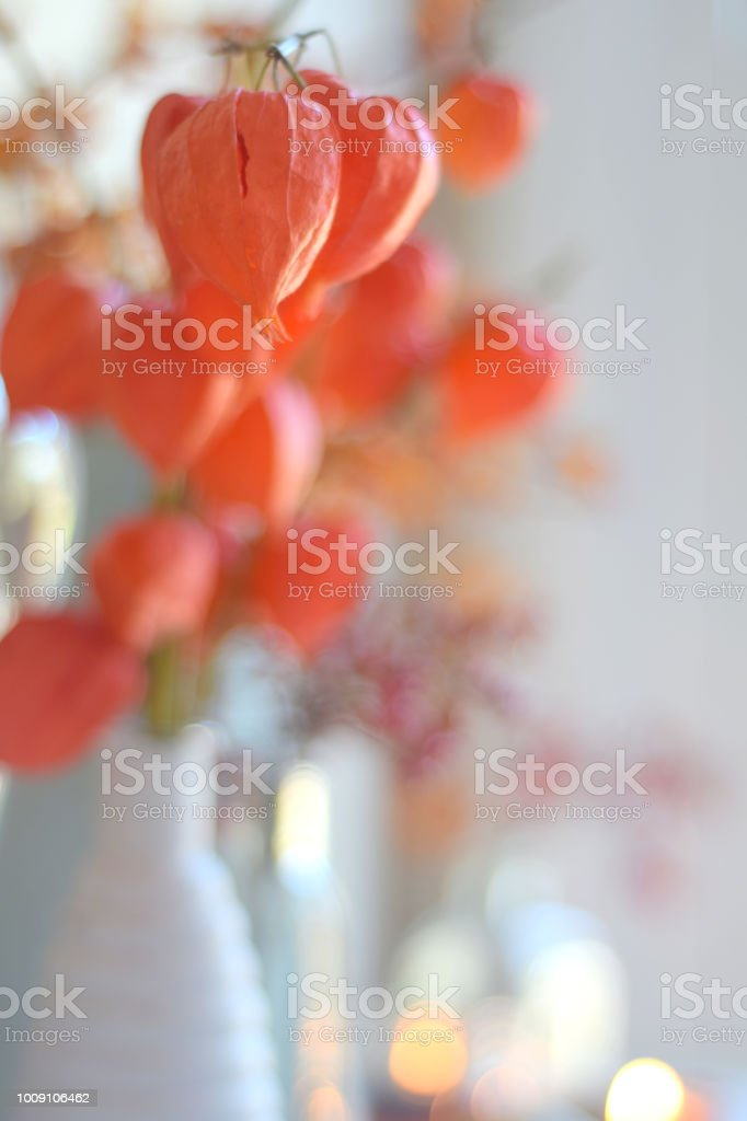 Dried Chinese Lantern Flower Pods On Stems Still Life With Dreamy Selective Focus Bokeh Light Glow Stock Photo Download Image Now Istock