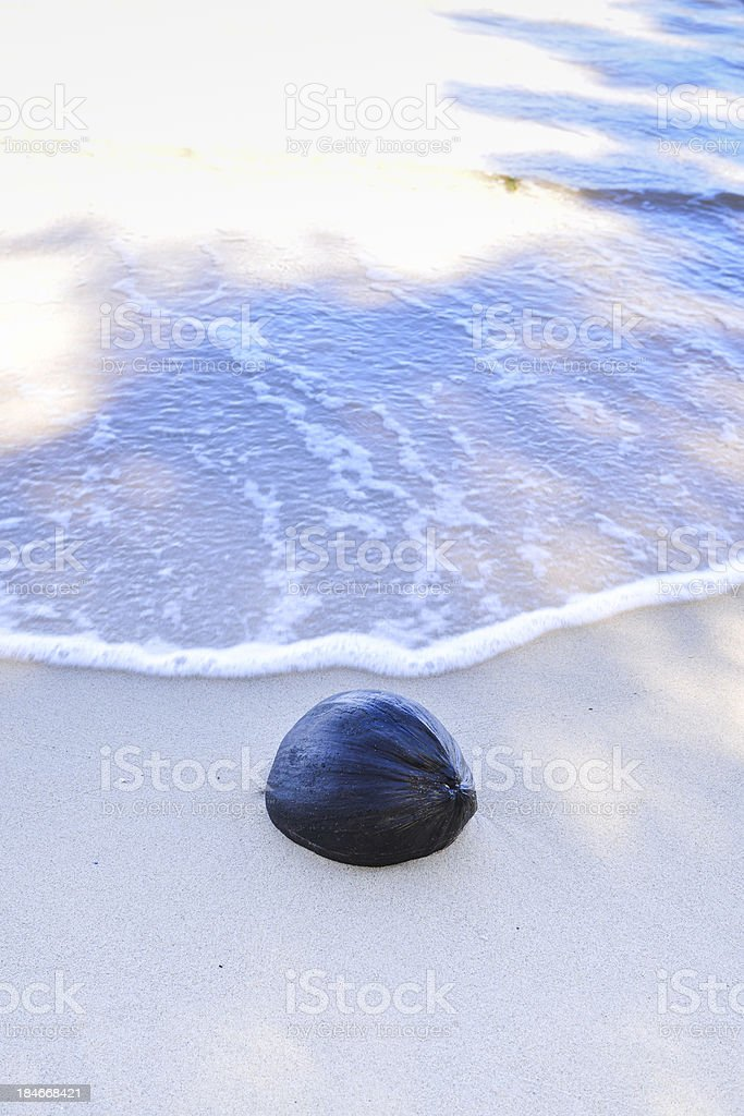 Dried Coconut in the beach stock photo