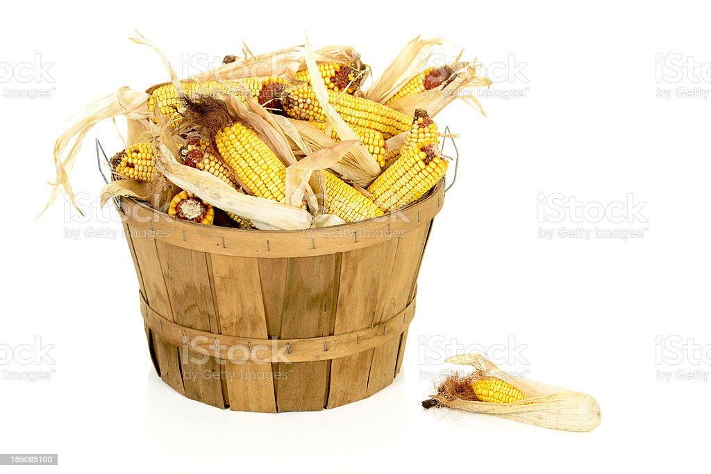 Dried Corn in a Bushel Basket stock photo