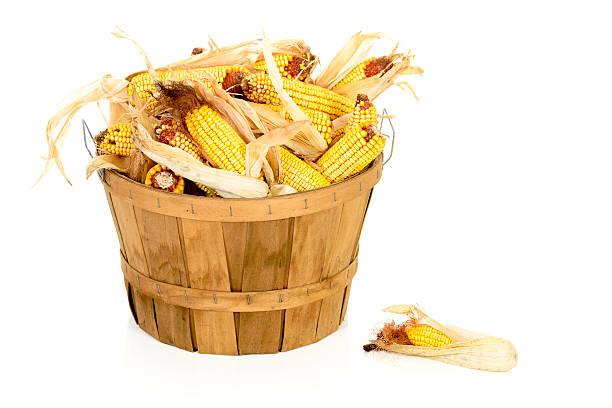 Dried Corn in a Bushel Basket stock photo
