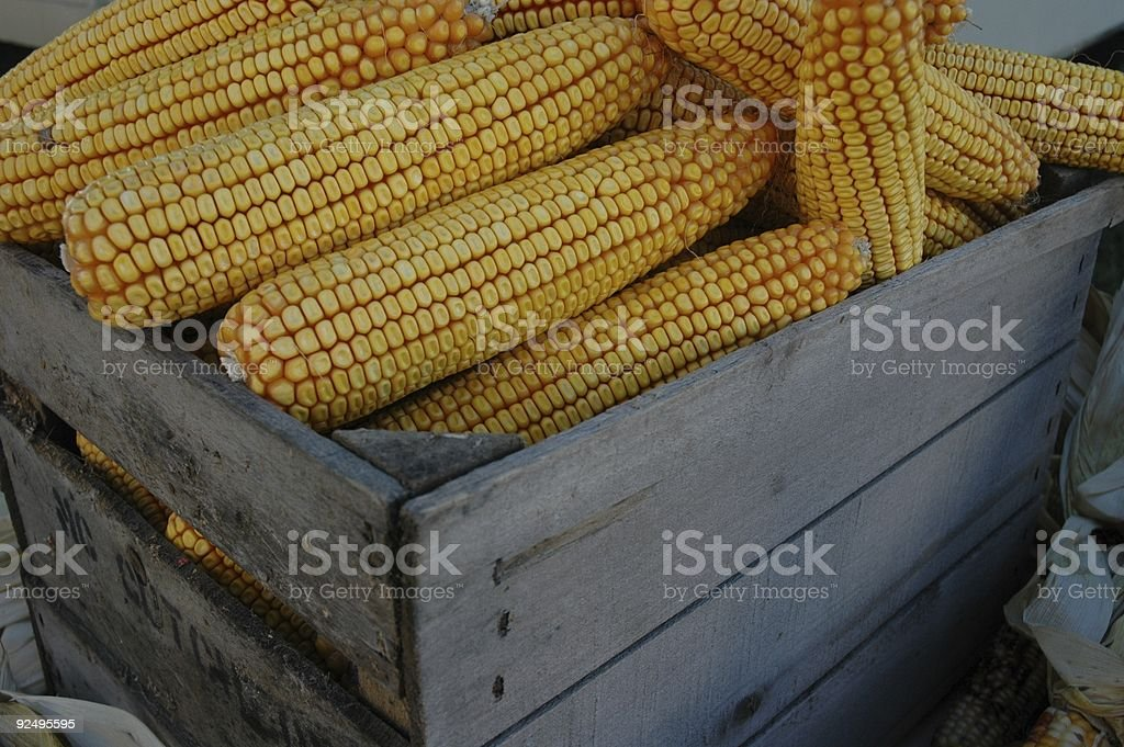 Dried corn royalty-free stock photo
