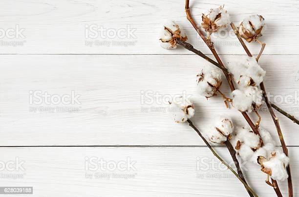 Dried cotton flower background on white wood top view picture id628039188?b=1&k=6&m=628039188&s=612x612&h=jsk9mbxibf0ktqzihmrdsq1tvmltmq7uh4fss69e5fu=