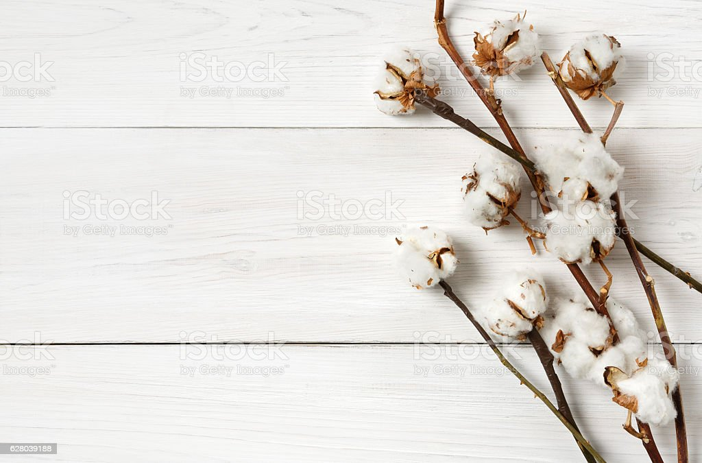Dried cotton flower background on white wood, Top view. stock photo