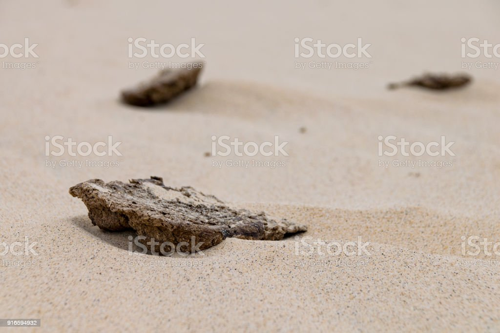 Dried cow pat in the sand stock photo