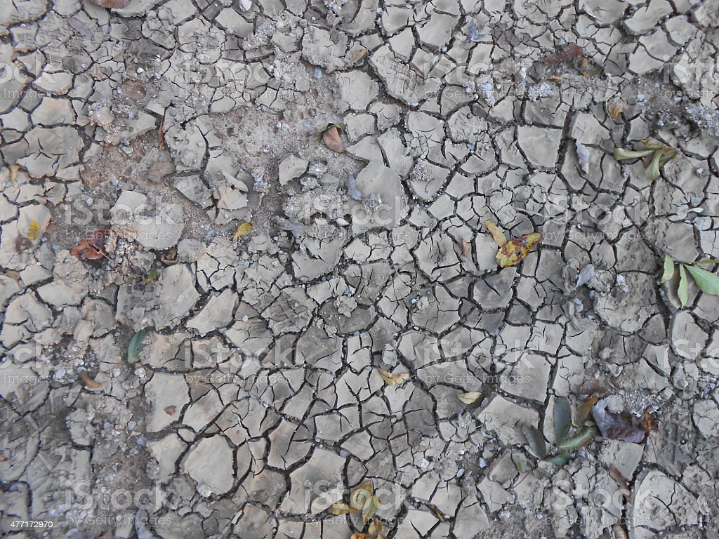 Dried, Cracked Mud with Scattered Small Leaves stock photo