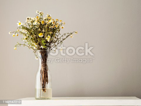 Daisy, asteraceae, dried plant, dry flower, camomile, marguerite