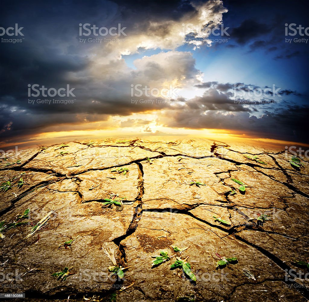 Dried desert land with sprouts stock photo