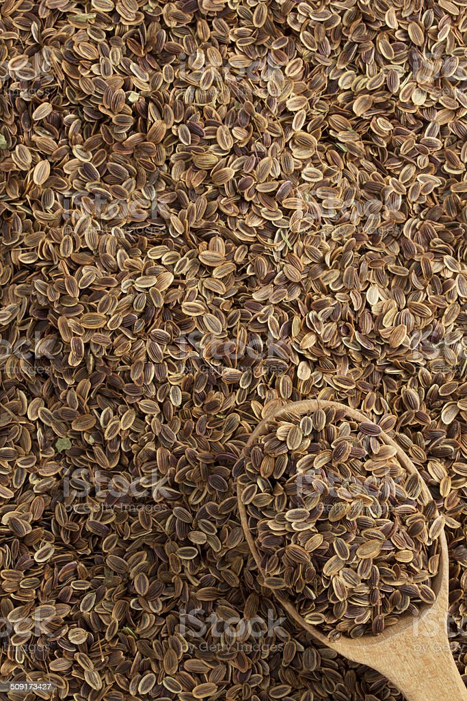 dried dill seeds in spoon stock photo