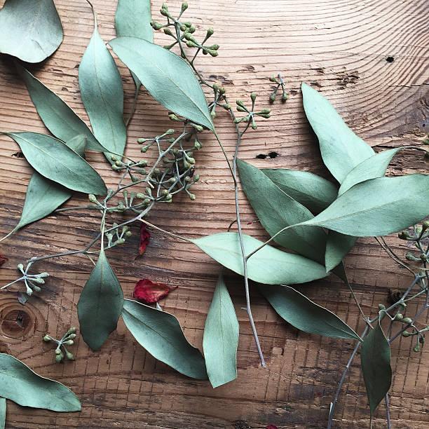 getrocknete eukalyptus auf holz - eukalyptusbaum stock-fotos und bilder