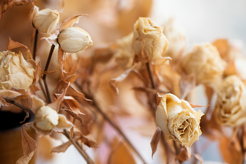 Dried faded flowers roses bouquet on blurred background