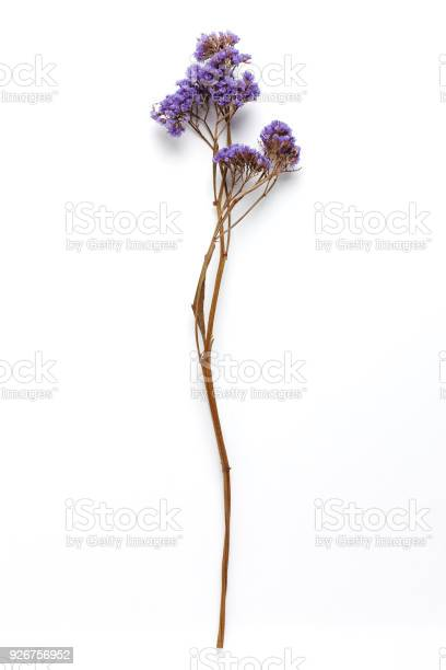 Dried field flower isolated on white background with real shadow picture id926756952?b=1&k=6&m=926756952&s=612x612&h=h19hplfxbkxq8srktakni1jpveo0so4aa3ttuvycxz8=