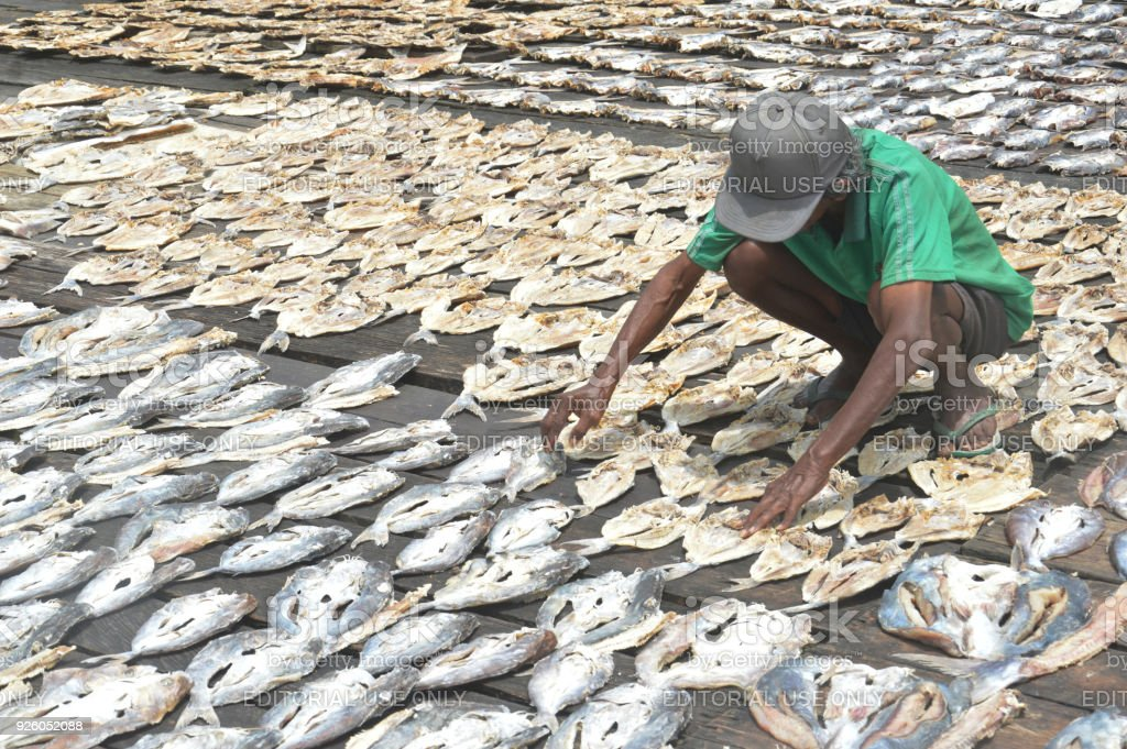 Dried Fish Farming Stock Photo & More Pictures of Agriculture | iStock