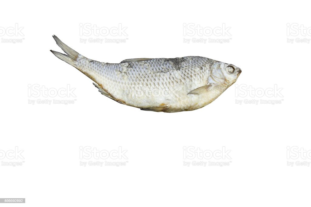 dried fish Isolated on white background stock photo