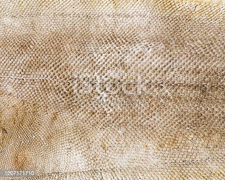 Dried fish skin closeup