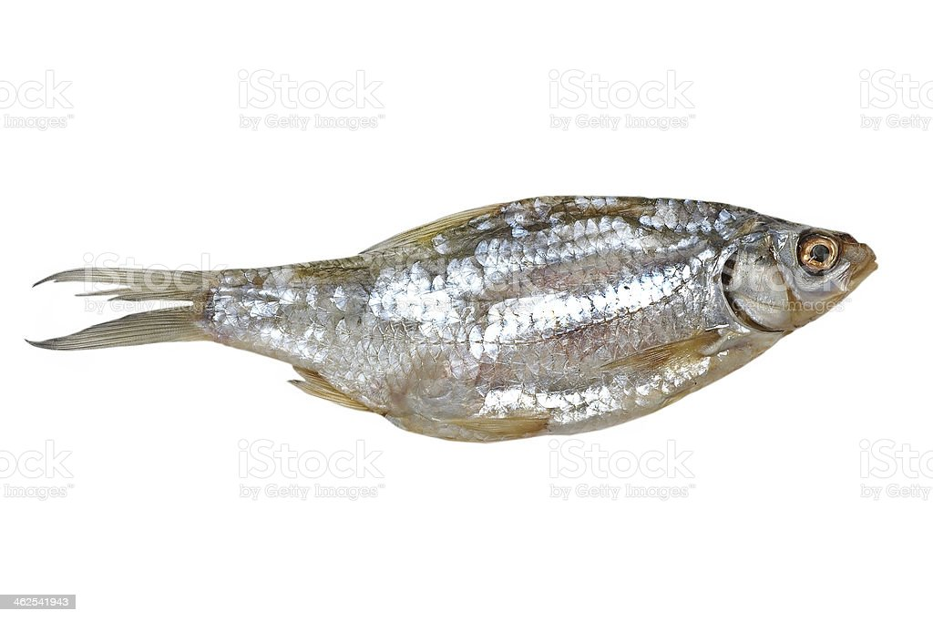 Dried fish.Isolated. stock photo