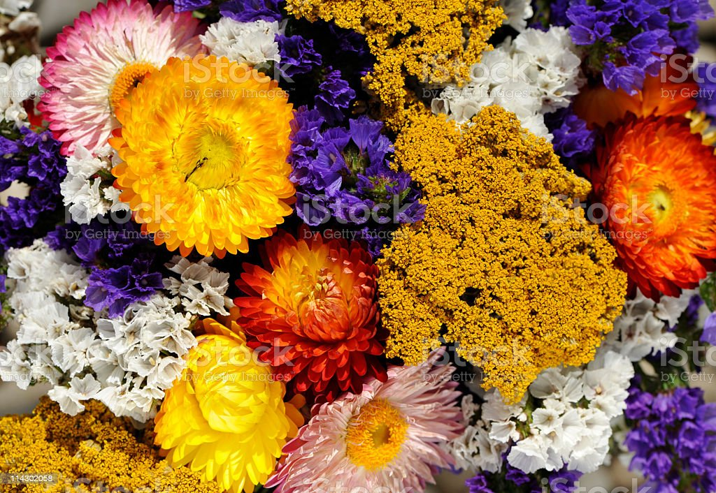 Colorful bouquet with dried yarrow,statice and straw flowers.