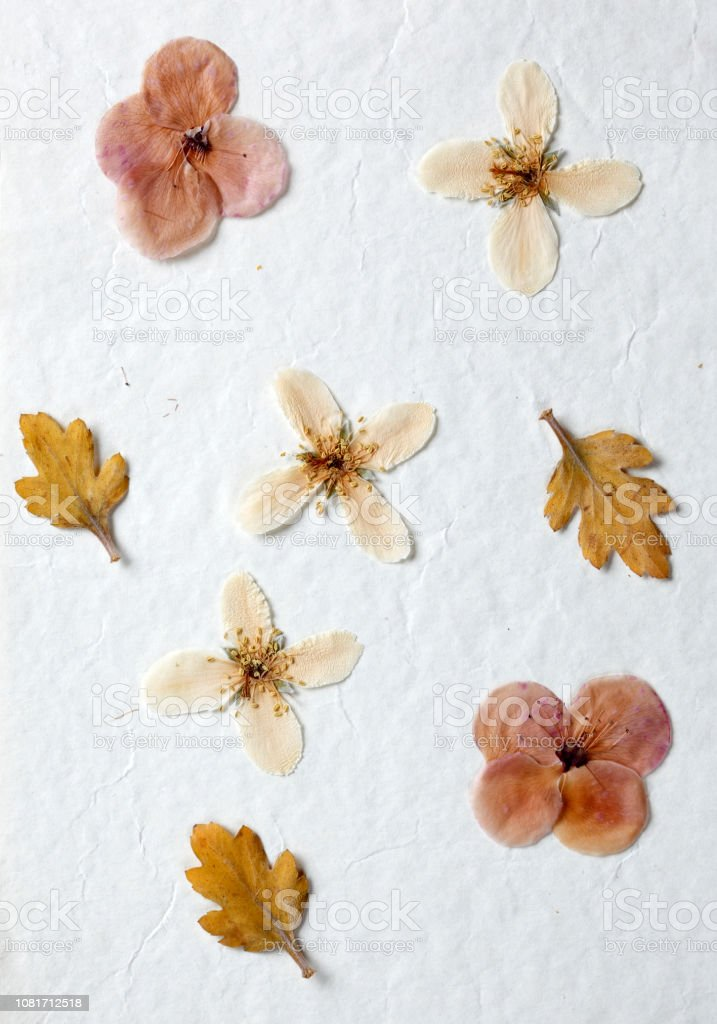 Dried flower decoration on white paper