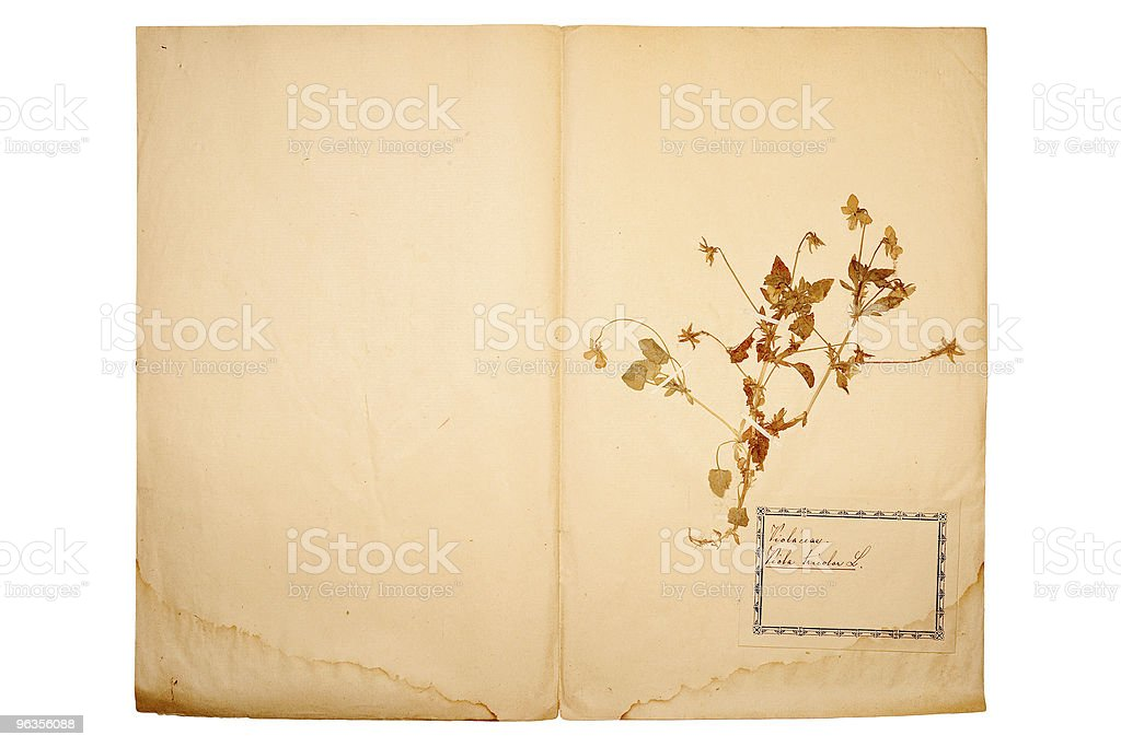 Dried flower on old, gone yellow paper royalty-free stock photo