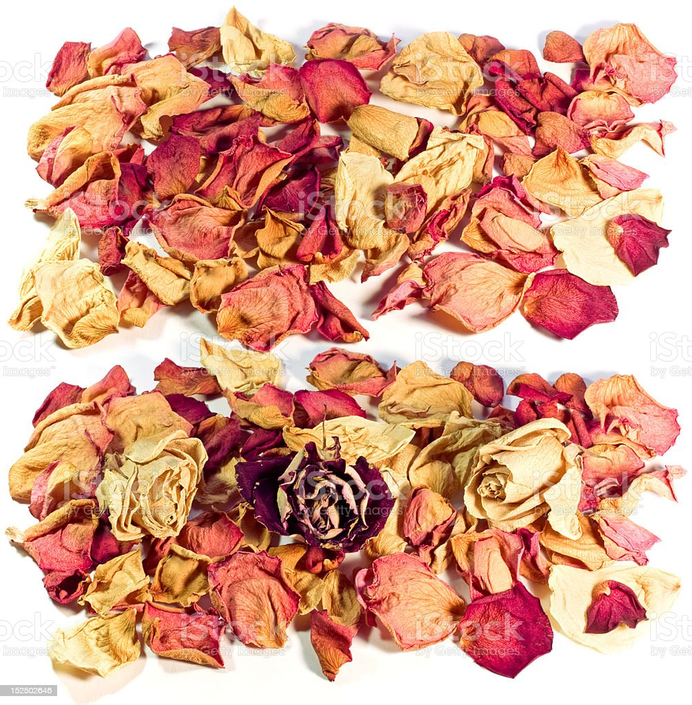 dried flower petals of roses decoration stock photo